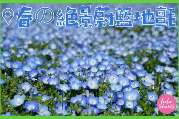 茨城粉蝶花