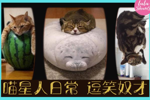 貓貓日常搞笑行為