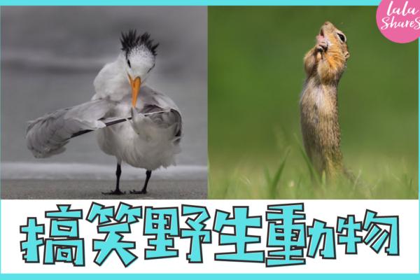 搞笑野生動物