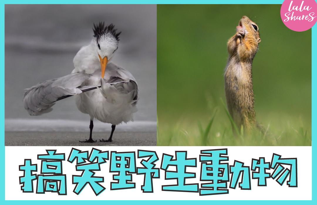野生動物攝影比賽