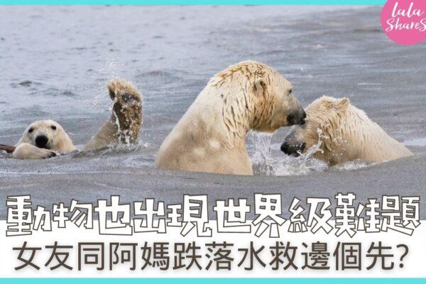 搞笑野生動物攝影比賽